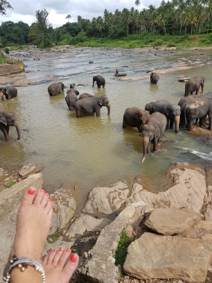 barefeet with elephants