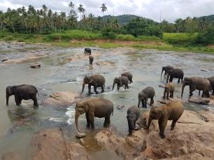 elephants at orphanage 2017 - 1