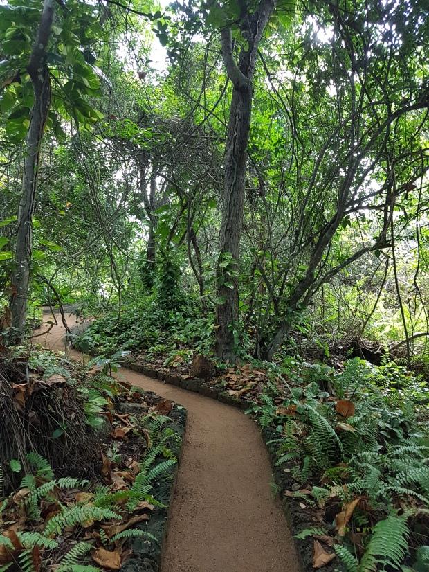 path on meditation island sri lanka 2017
